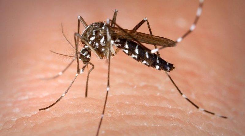 Zanzara aliena. Fonte Rainews